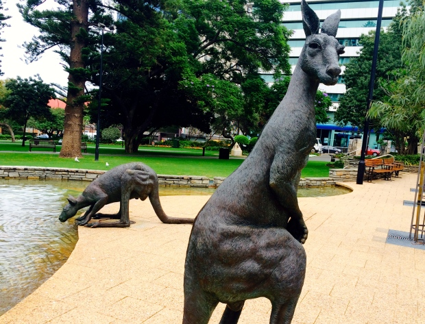Roos on the streets of downtown Perth.